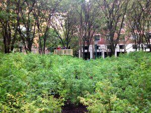 Spencer Finch, redwood, redwood trees, Lost Man Creek, Downtown Brooklyn