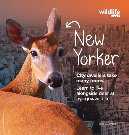 New program teaches New Yorkers how to interact with city wildlife