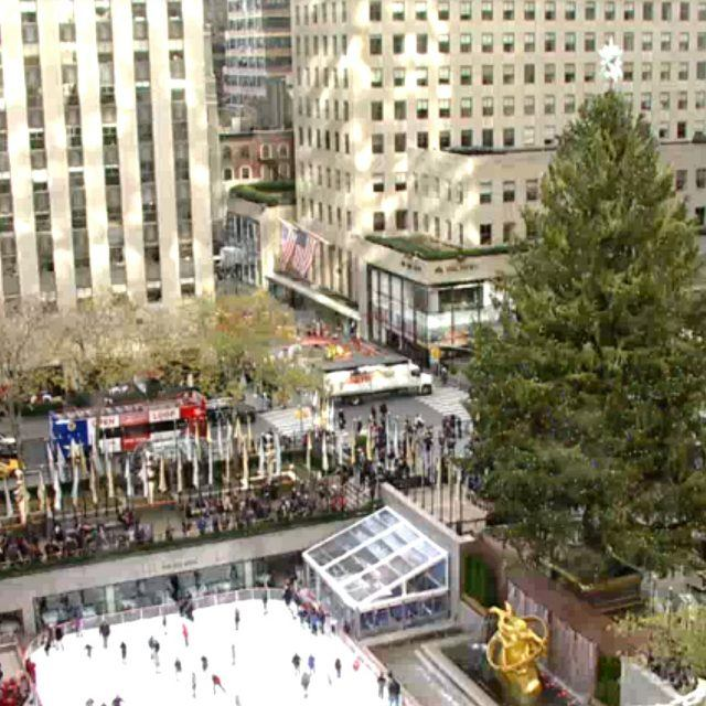 Watch a live feed of the Rockefeller Center Christmas Tree; new Union Square Cafe opens next week