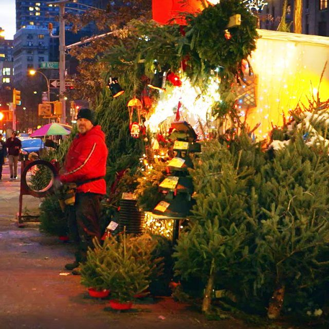 New documentary 'Tree Man' explores the lives of NYC's Christmas tree sellers