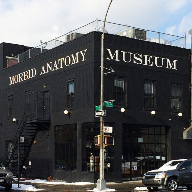 Brooklyn's Morbid Anatomy Museum needs $75K to stay afloat