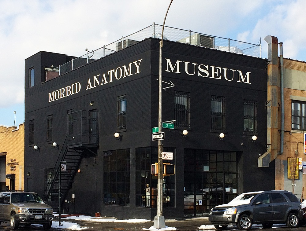 Brooklyn\'s Morbid Anatomy Museum needs $75K to stay afloat | 6sqft