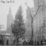 madison square park, christmas tree, public christmas tree, christmas, xmas, holiday, history