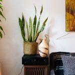 alexandra-king-park-slope-brooklyn-nyc-apartment-mysqft-plant-detail