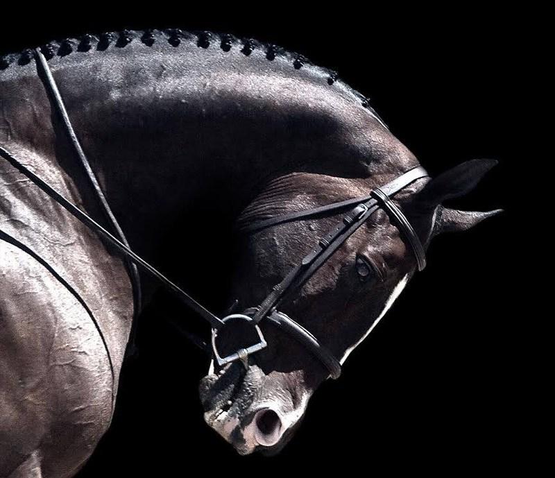 horse-whisperings