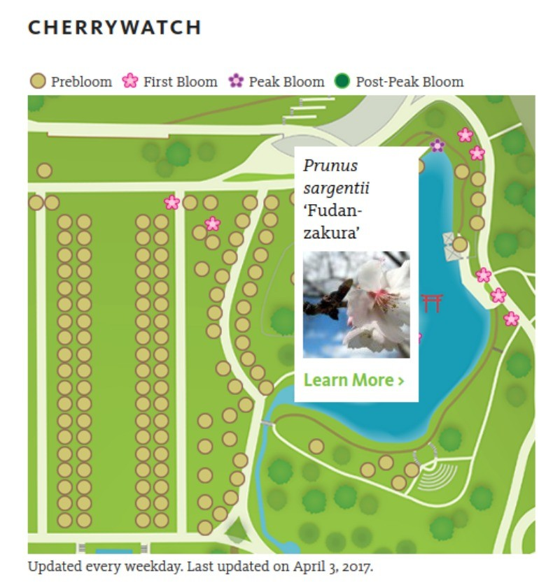 Brooklyn Botanic Garden, Map of Cherry Blossoms, Cherry Tracker