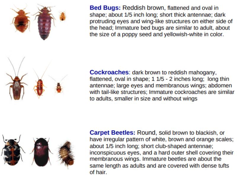 Bedbug Chart, NYC, tenants