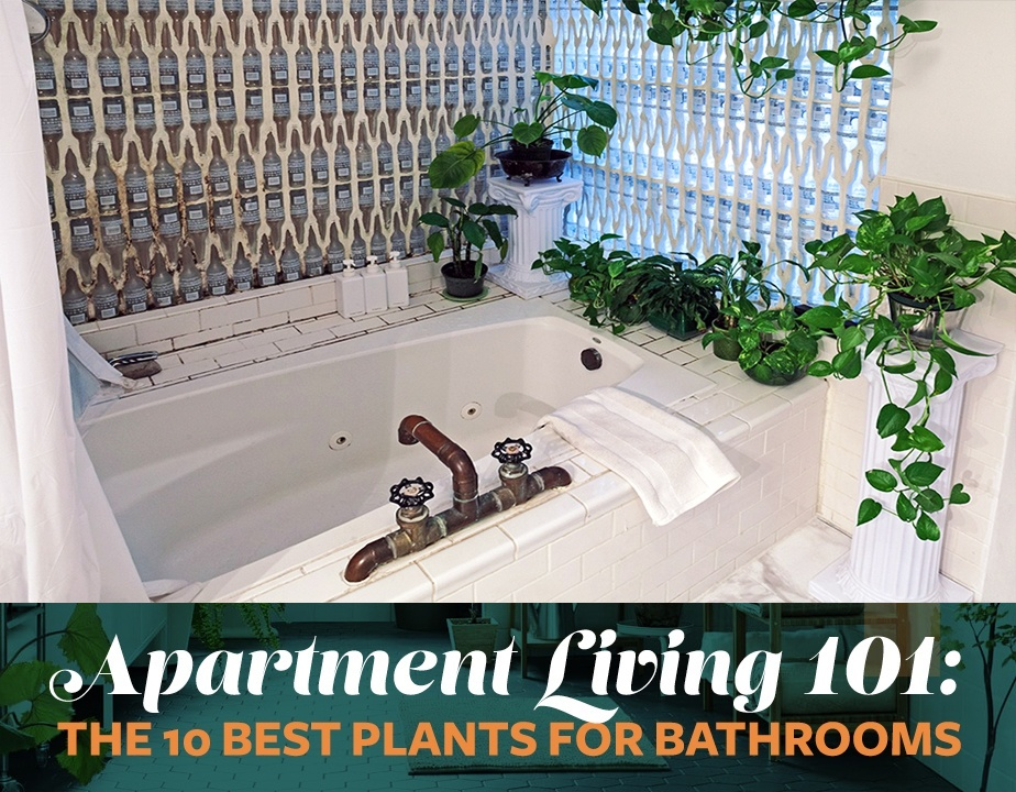 view photo in gallery - Bathroom Plants