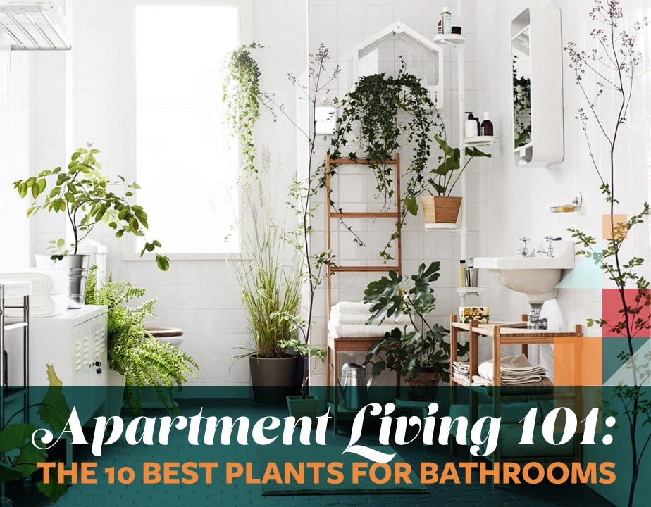Apartment living 101 the 10 best plants for bathrooms 6sqft for Best plants for bathrooms