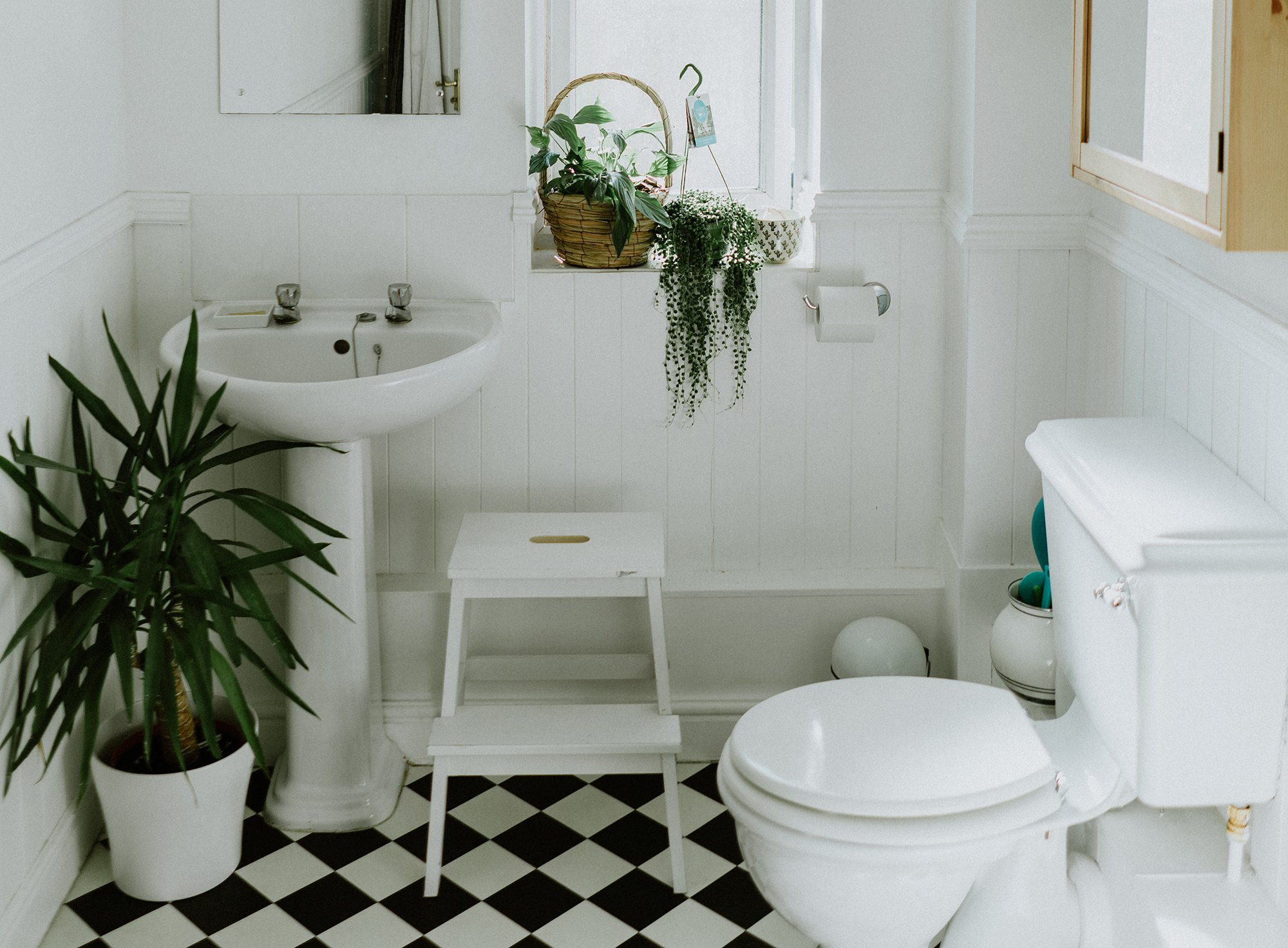The 20 best plants for bathrooms   20sqft
