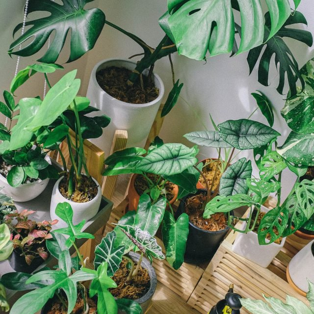 The 15 best air-purifying plants for your home