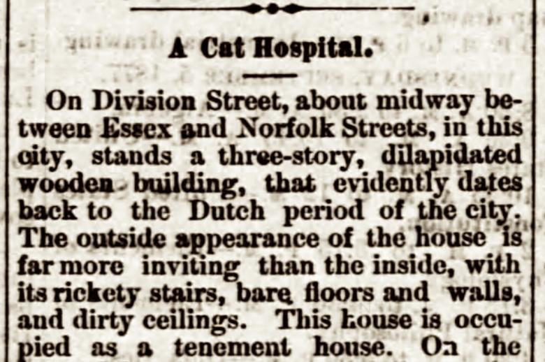 cat hospital, cat lady, nyc history