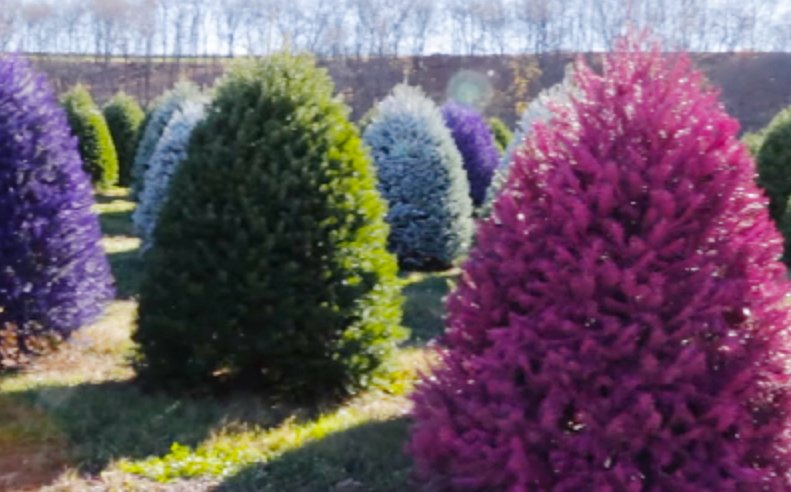 NJ farm selling rainbow-colored Christmas trees; new MTA president 'confident' he can fix the subway
