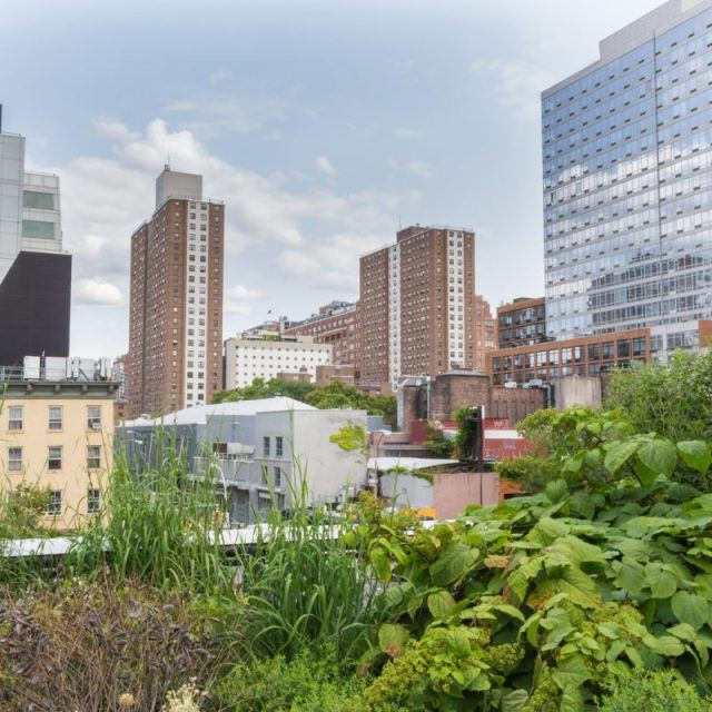 NYC establishes a digital hub for urban agriculture