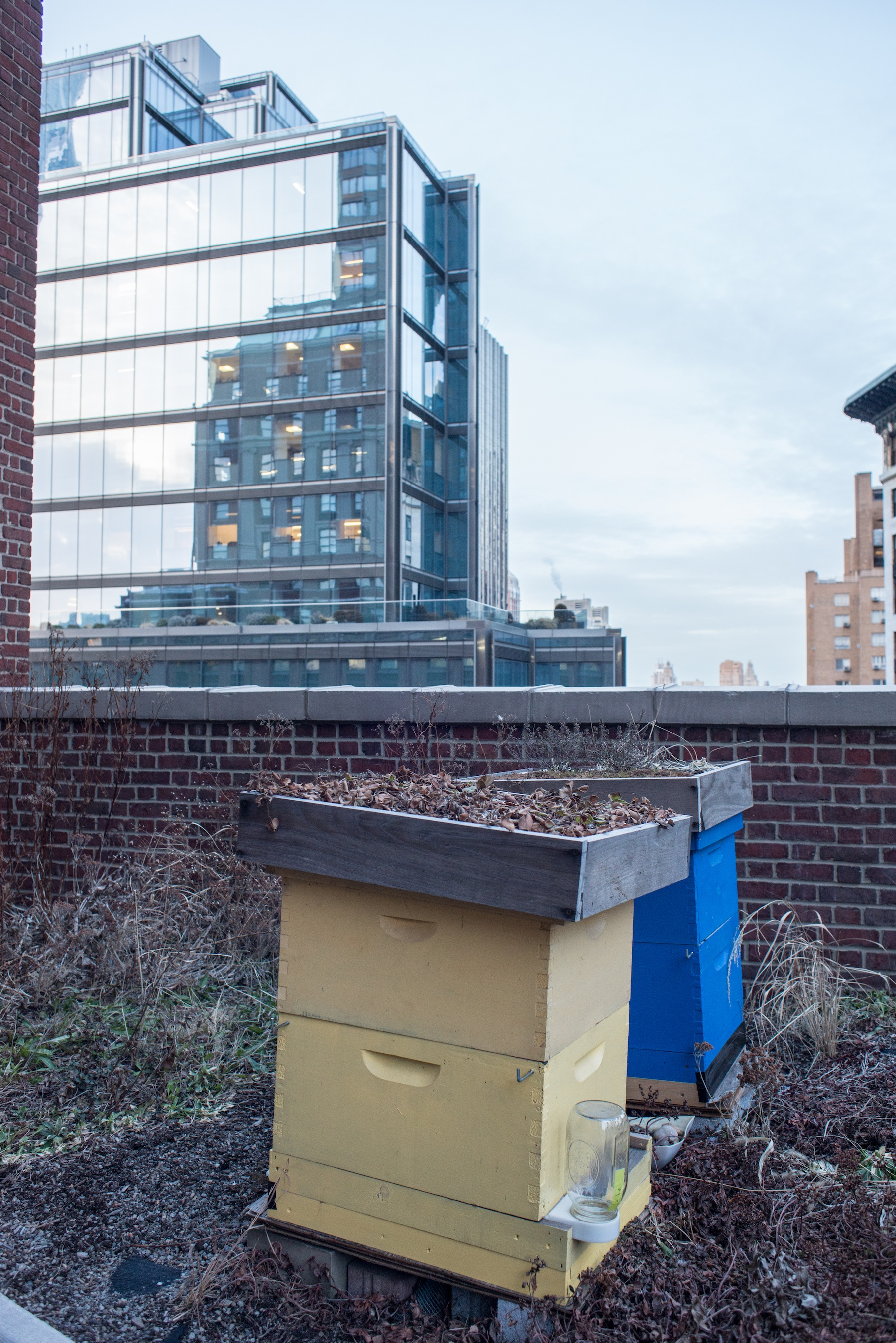 contemporary kitchen office nyc. once beekeeping became legal in new york city 2010, several cookfox employees expressed interest adding hives on their previous green roof. contemporary kitchen office nyc f