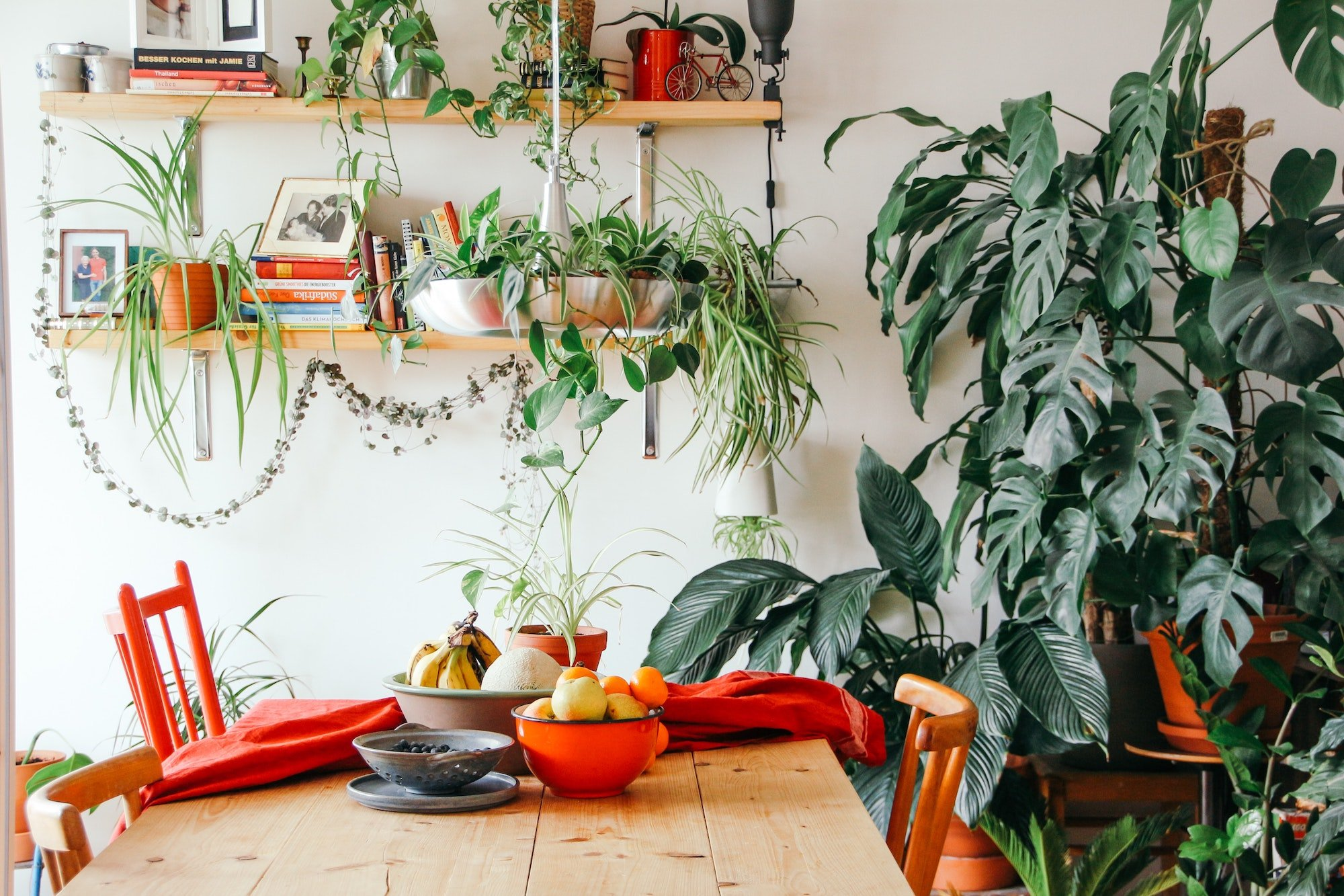 The 10 Best Plants For Apartment Dwellers 6sqft