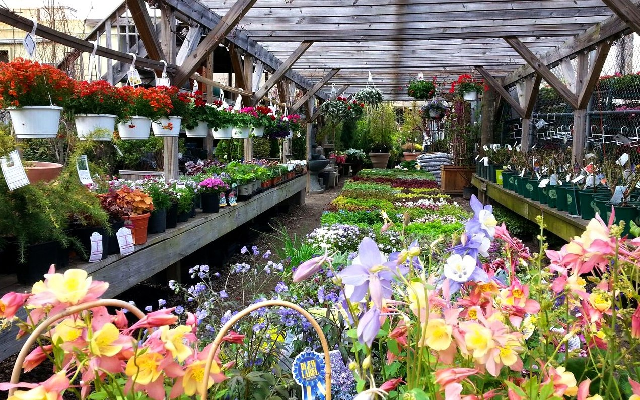 The 10 Best Plant Shops In Nyc 6sqft