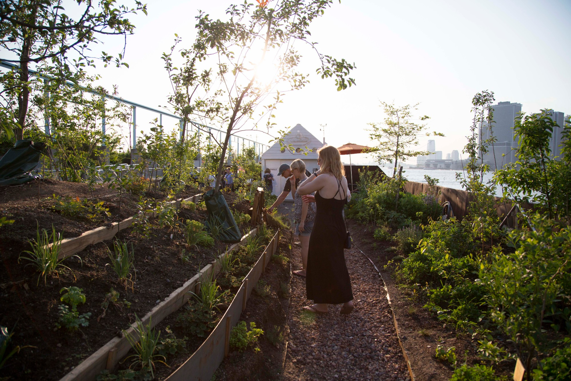 A public floating food forest will come to the Brooklyn Army ...