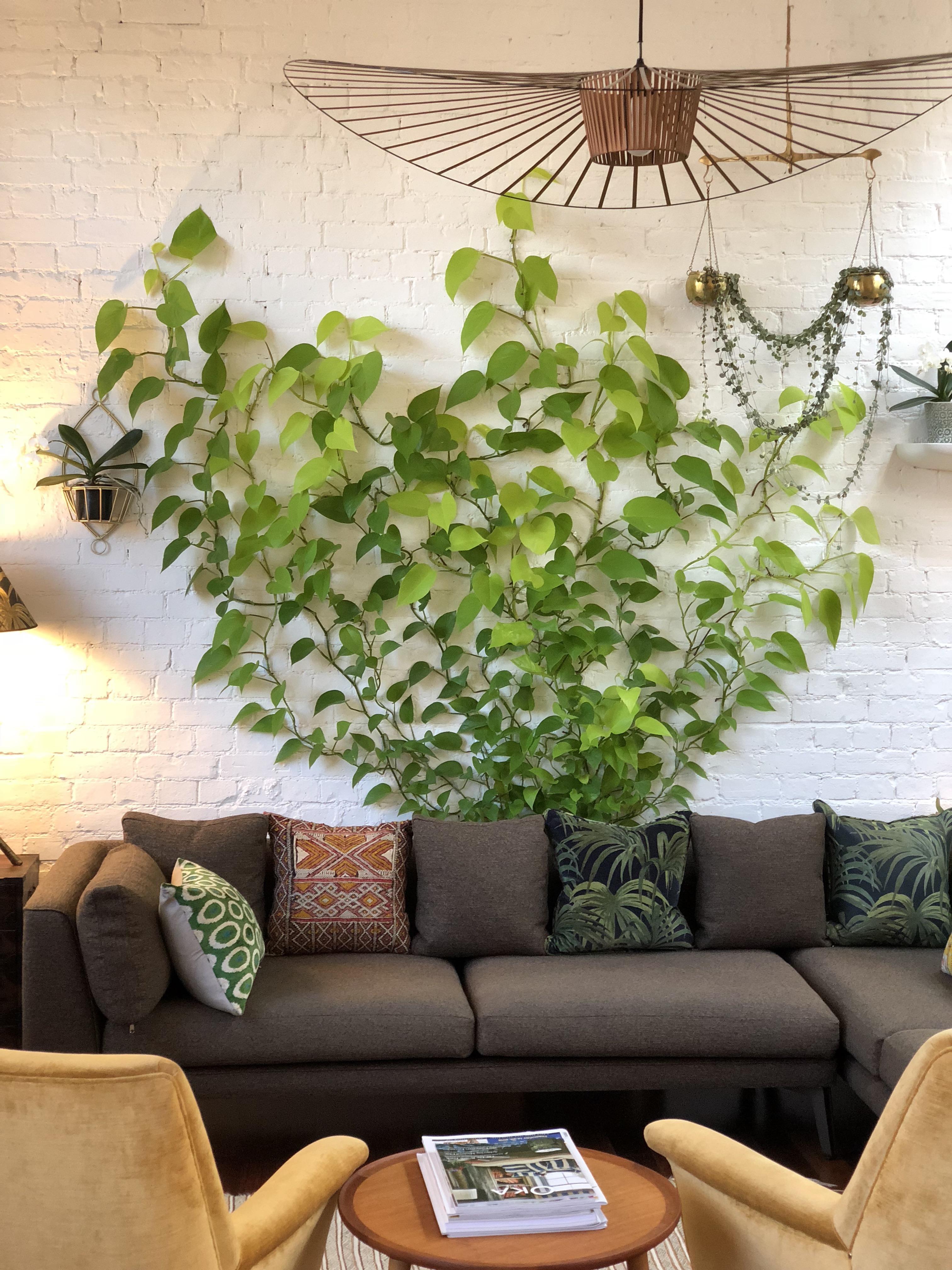 Toolbox Tutorials Turn An Easy Care Houseplant Into A Dramatic Climbing Garden 6sqft