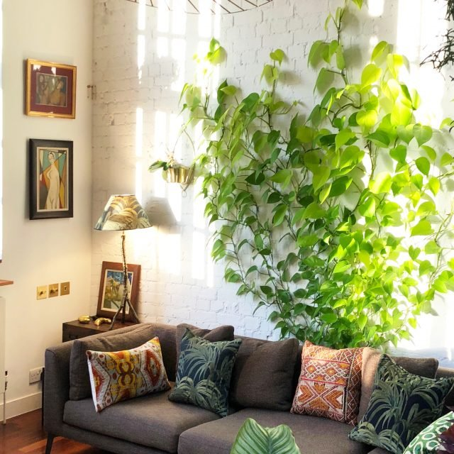 Turn an easy-care houseplant into a dramatic climbing garden
