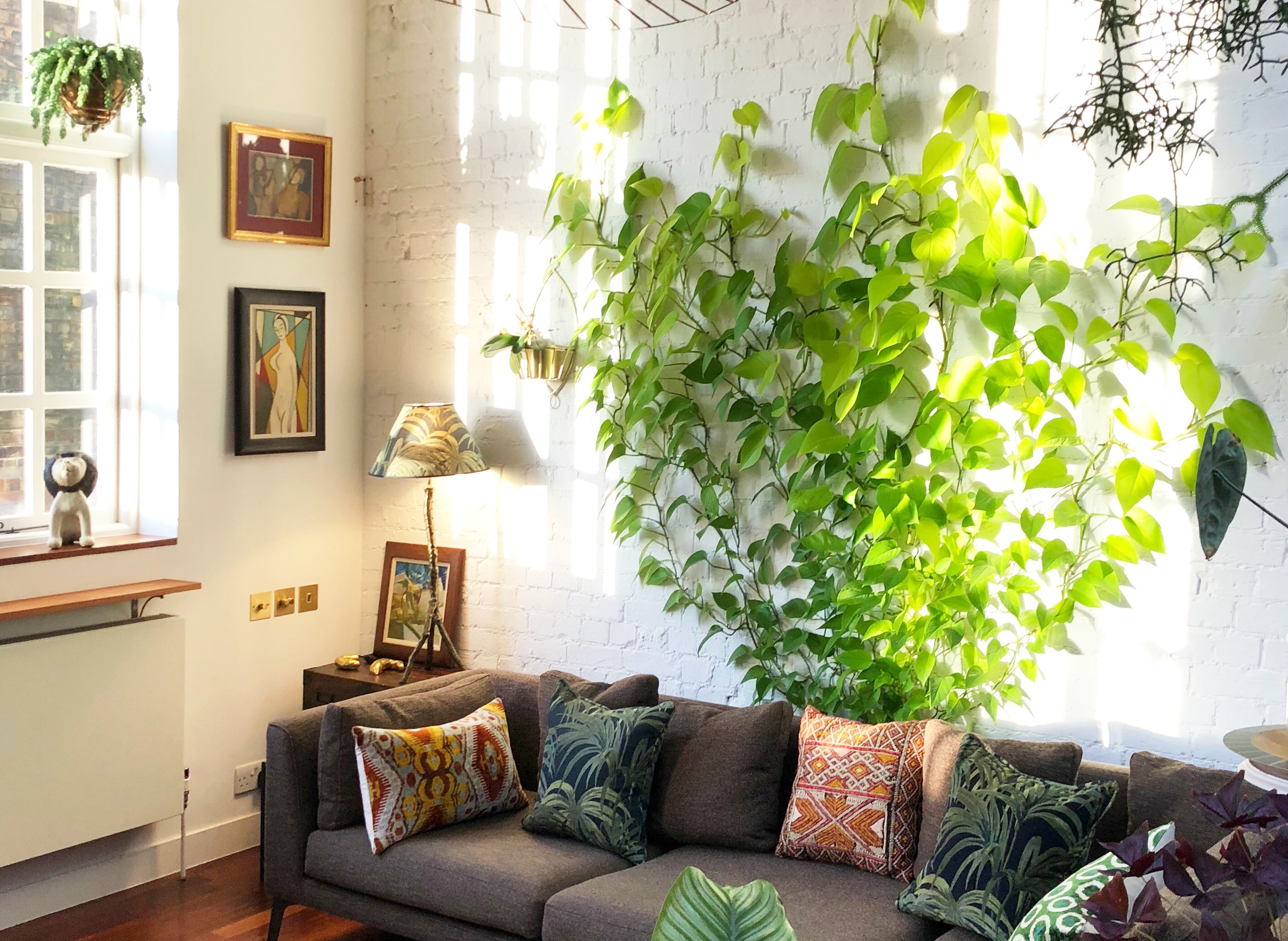 Toolbox tutorials turn an easy care houseplant into a - Ivy interior design software reviews ...