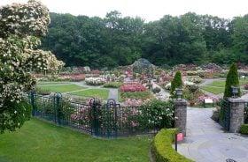 New York Botanical Garden, botanical garden, bronx