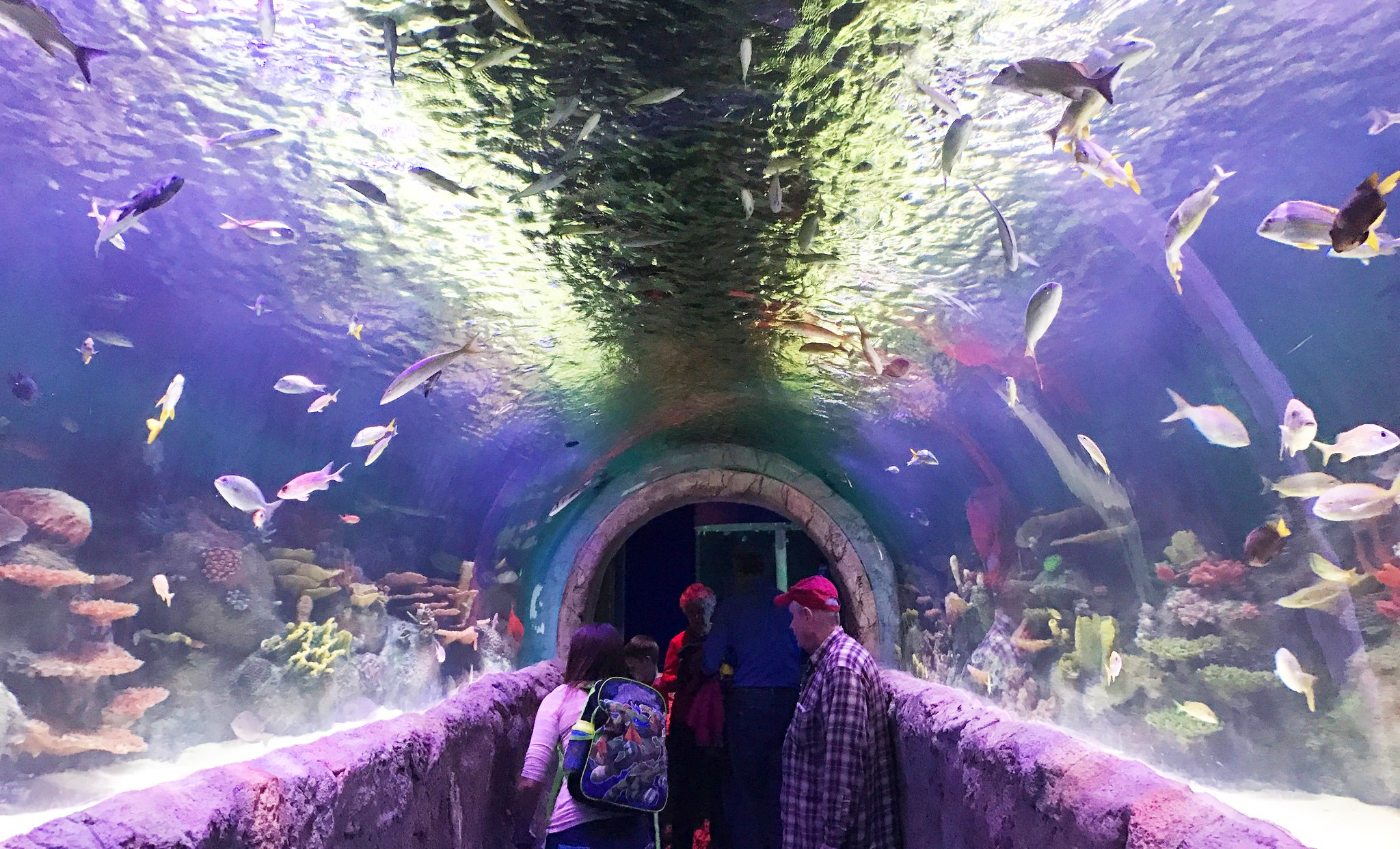 This August Party On The Rooftop Of The New York Aquarium 6sqft