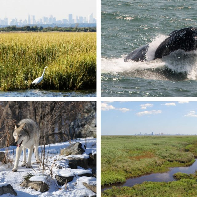 The 8 best wildlife activities in and around NYC