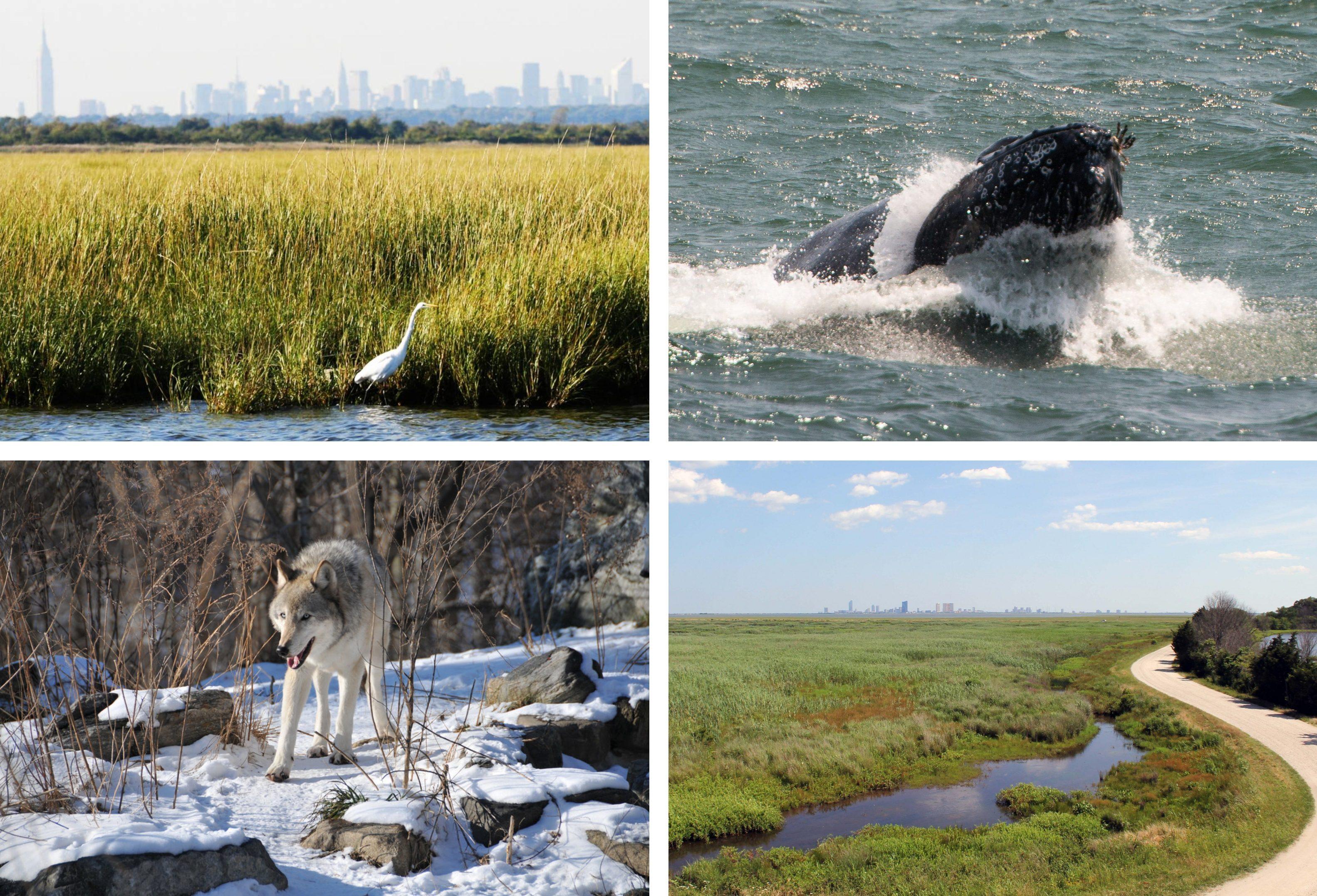 The 8 best wildlife activities in and around NYC | 6sqft
