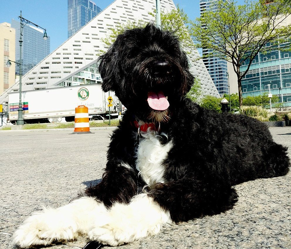 NYC pet laws: A legal loophole may let Fido stay despite your
