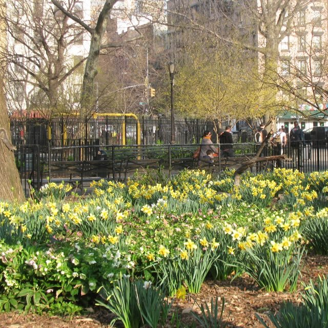 Help plant 500,000 daffodils around NYC to remember 9/11