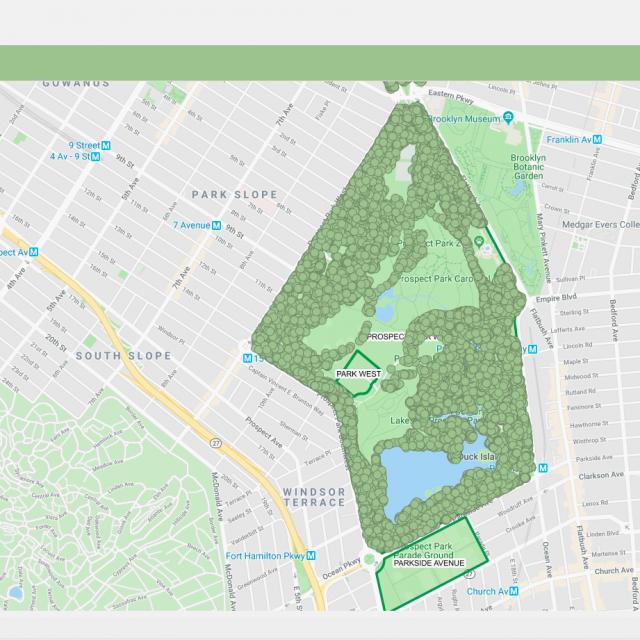 Interactive map lets you explore Prospect Park's 200 tree species