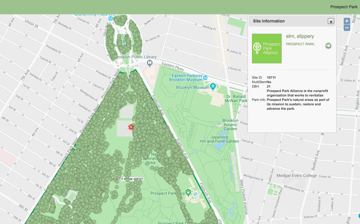 Prospect Park Subway Map.Interactive Map Lets You Explore Prospect Park S 200 Tree Species