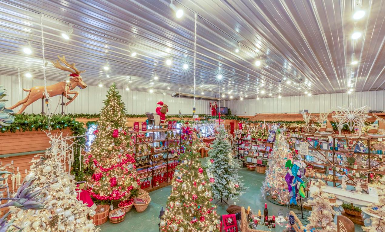 Christmas Tree Farm Long Island