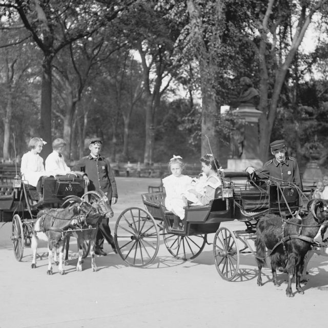Billy goats and beer: When Central Park held goat beauty pageants