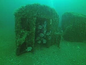stephen mallon, sea train, artificial reef, events, photography