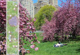 Central park, flowers, spring