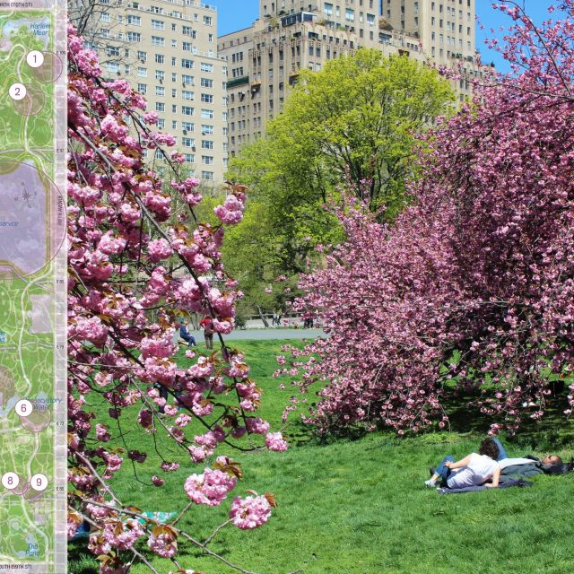 Find your favorite spring blooms in Central Park with a map and interactive guide