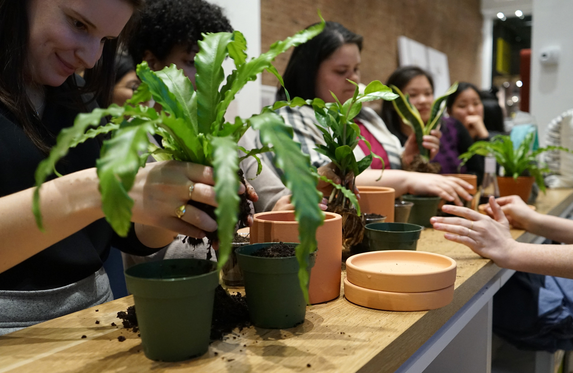 The 10 Best Spots For Plant Classes In Nyc 6sqft