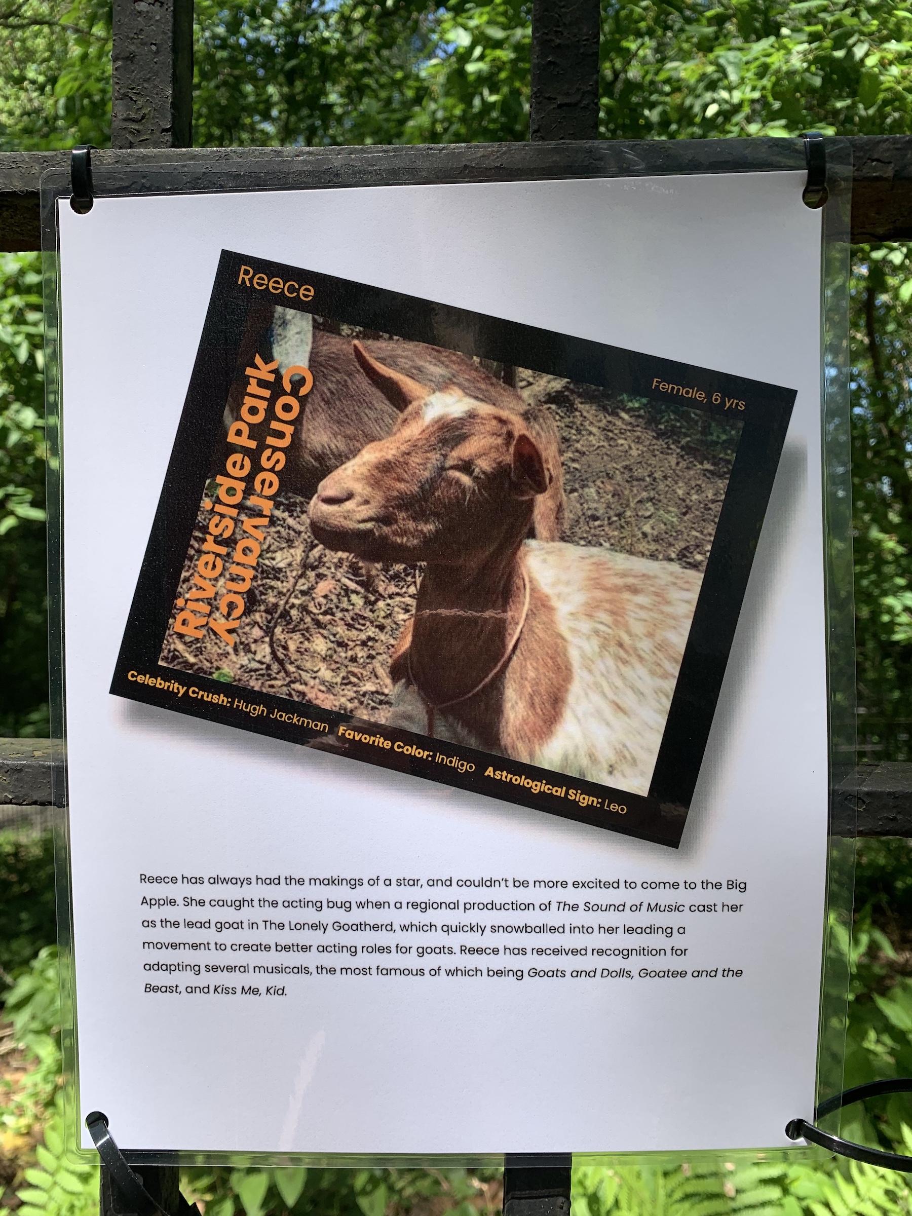 Goatham, goats, Riverside Park