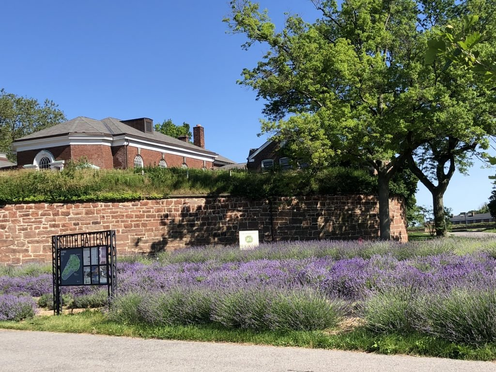 lavender, field, governors island
