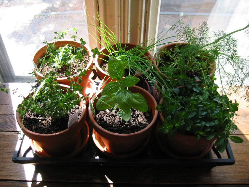 herb garden, garden, apartment plant