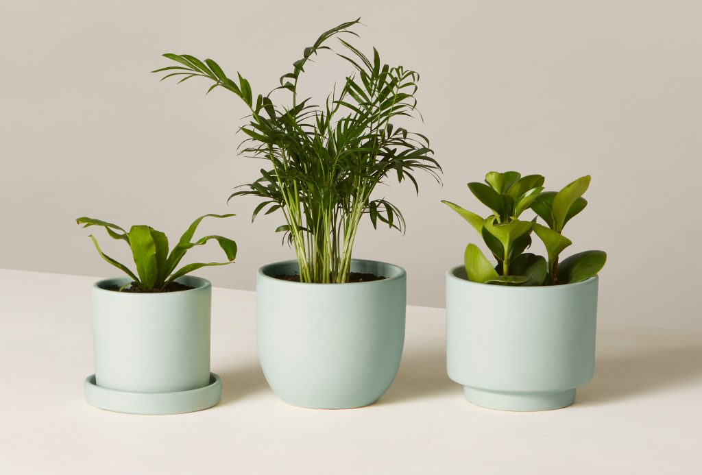 pet friendly plants, houseplant, the sill