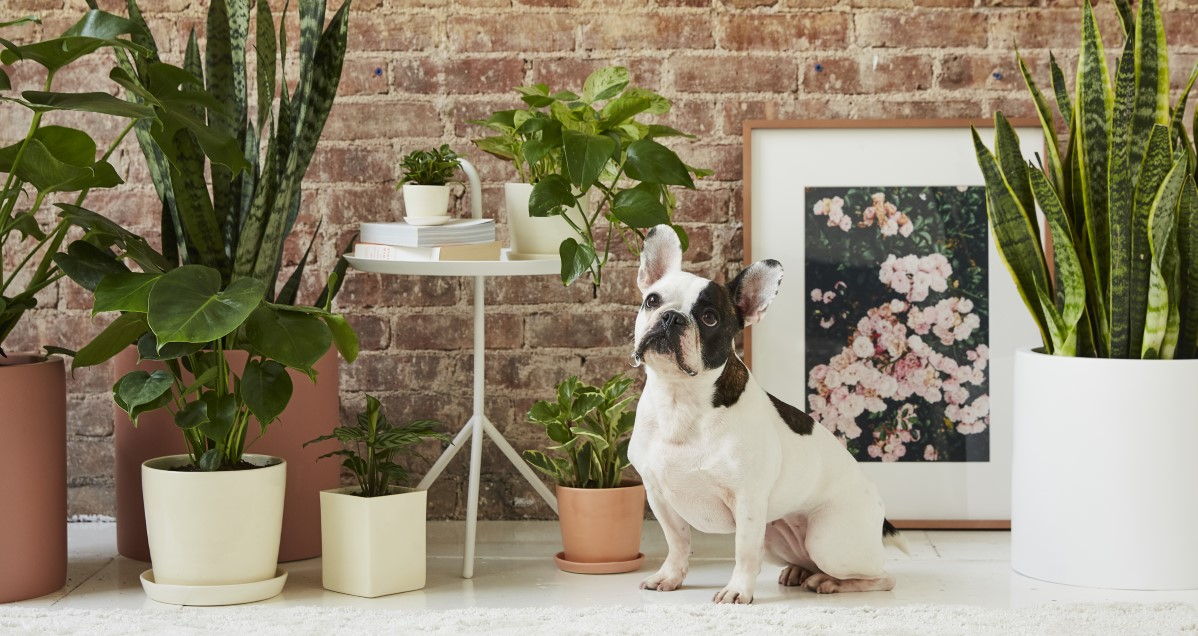 10 houseplants that are safe for dogs and cats