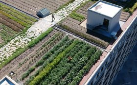 Brooklyn Grange Sunset Park, NYC rooftop farm