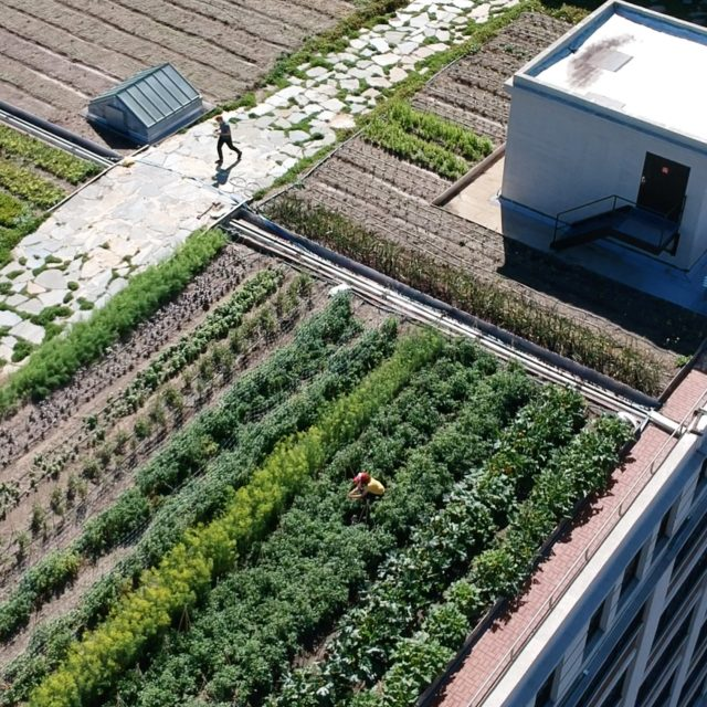 Brooklyn Grange opens NYC's largest rooftop farm in Sunset Park