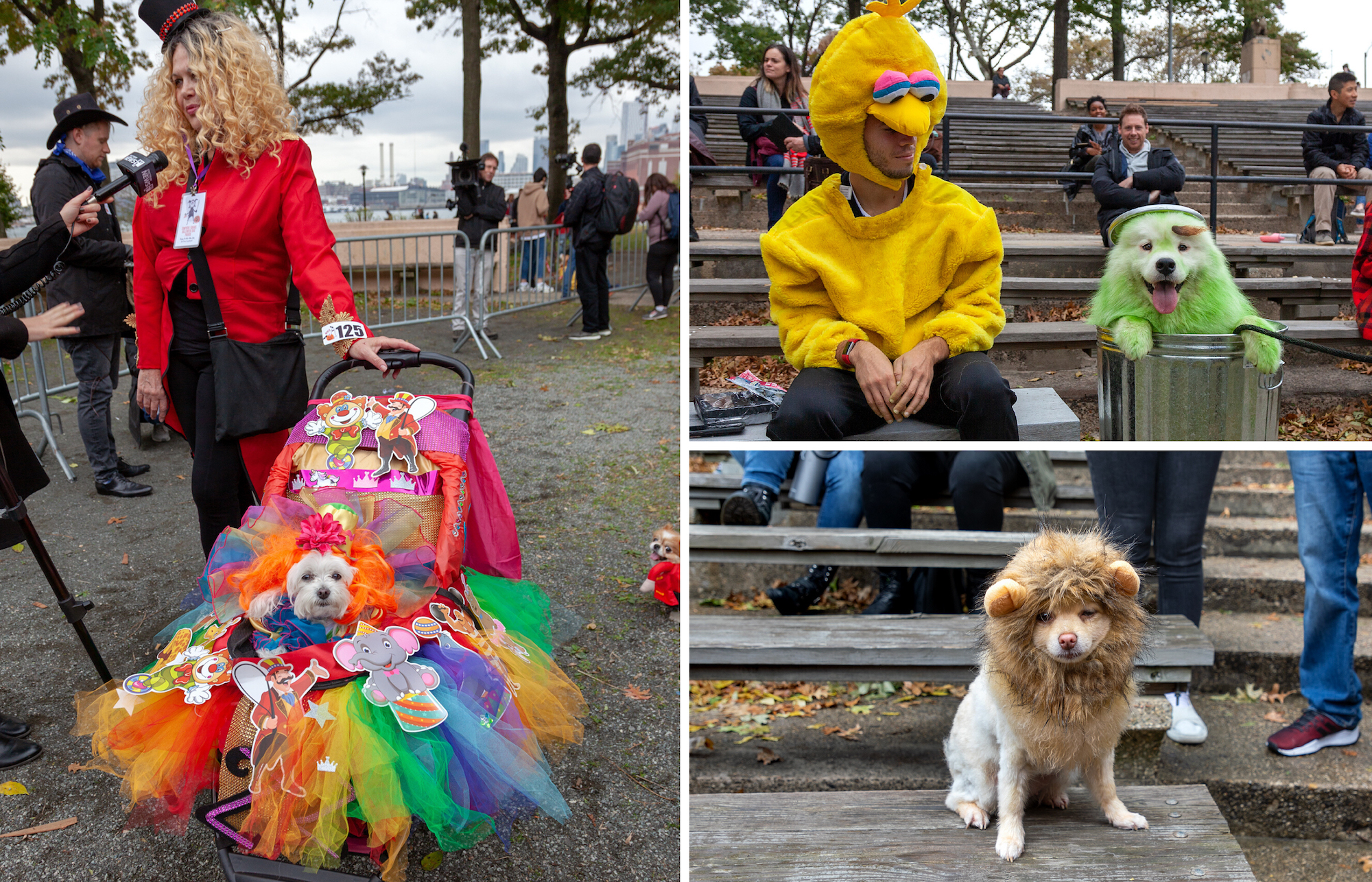 Halloween Dog Parade 2020 Tompkins Square Park PHOTOS: See the best costumes from this year's Tompkins Square