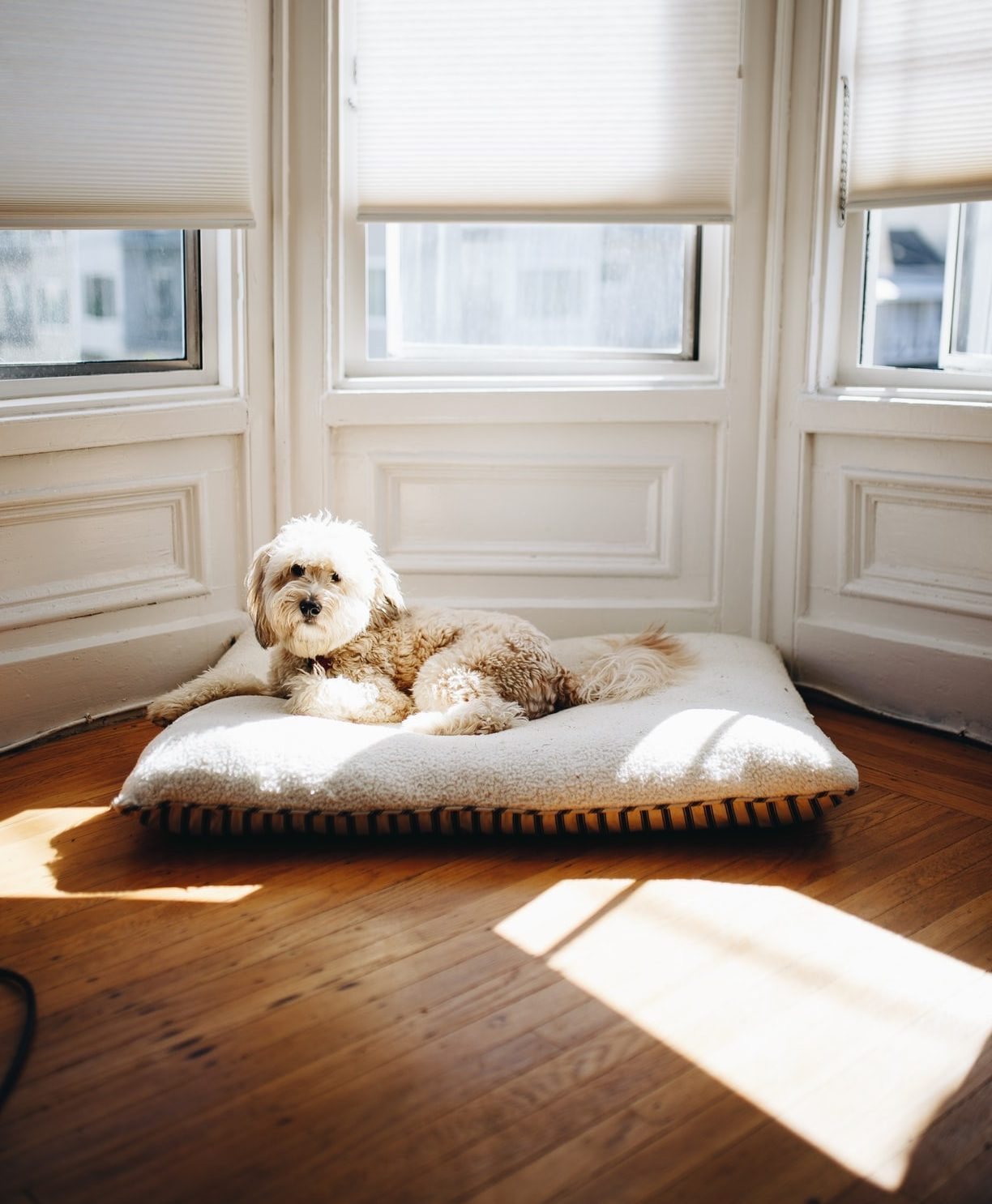 9 Best Dog Breeds For Nyc Apartments 6sqft