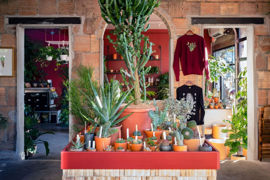 With a new 'Arid Room' focused on rare cacti and succulents, Tula is growing its roots in Greenpoint - 6Sqft