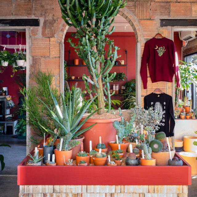 With a new 'Arid Room' focused on rare cacti and succulents, Tula is growing its roots in Greenpoint